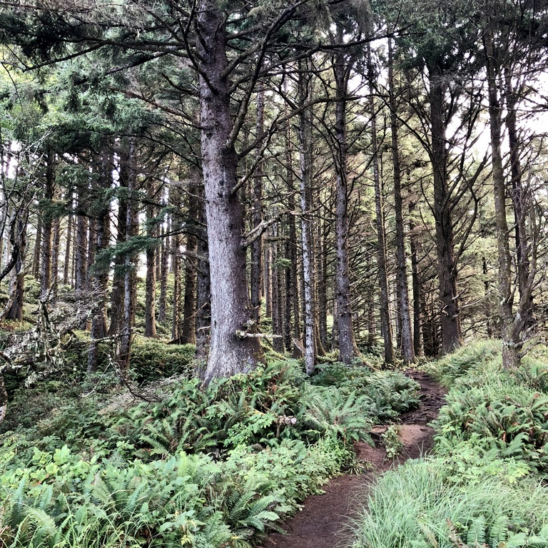 hiking trail in Ecola State Park at Cannon Beach, Oregon
